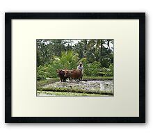Oxen at work Framed Print