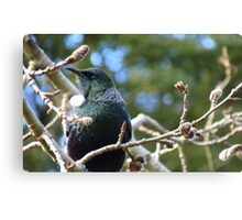 Just had my hair done what do you think! - Tui - Invercargill - NZ** Canvas Print