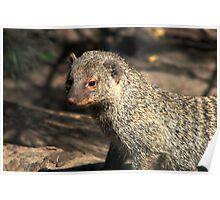 MONGOOSE Poster