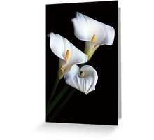 Lily of the Nile Greeting Card