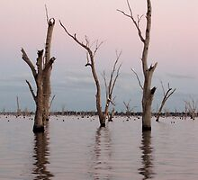 Lake Mulwala at Dusk by dozzam