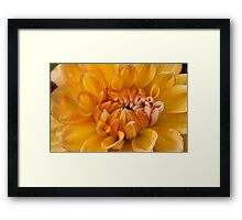 Wet Dahlia Framed Print
