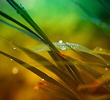 Morning Dew by Alan Watt