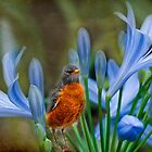 Robin in flowers by LudaNayvelt