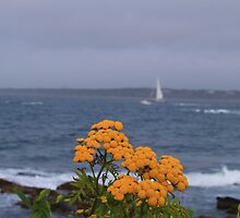 Yellow flowers and sailing yacht by Vitaliy Gonikman