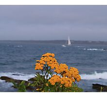 Yellow flowers and sailing yacht Photographic Print