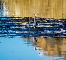 Great Blue Heron by Pamela Newcomb