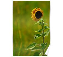 Lonesome Sunflower Poster