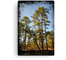 New Jersey Pinelands Canvas Print