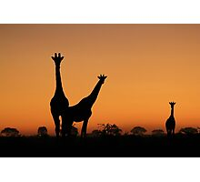 Giraffe Silhouette - African Wildlife Background - Grace and Elegance Photographic Print