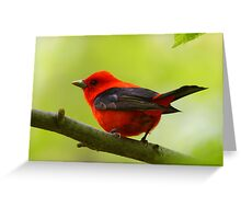 Scarlet Tanager Greeting Card
