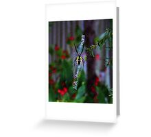 Argiope Orb Web Spider Greeting Card