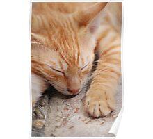 Cat in Crete 3 Poster