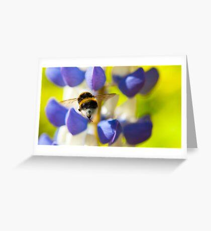 Bumble Bee on Lupin Greeting Card