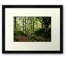 Woodland glade Framed Print