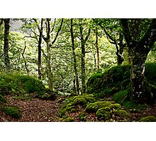Woodland glade Photographic Print