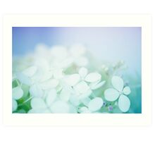 Hydrangea - pale blue & purple fine art flower photograph Art Print
