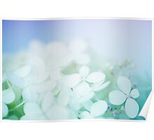 Hydrangea - pale blue & purple fine art flower photograph Poster