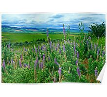 Lupine Valley Poster