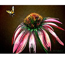 The Bee and the Flower  Photographic Print