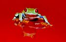 Red Reflection by Val Saxby