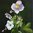 Ranunculaceae by atelier1