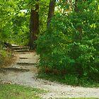 Trail Walk by Susan Blevins