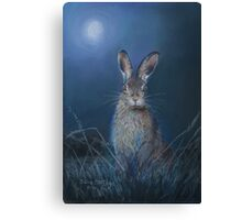 Hare in moonlight Canvas Print