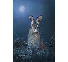 Hare in moonlight Photographic Print