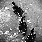 Ducklings by Sarah Bjorklund