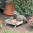 World's Largest Squirrels by Shelley Neff