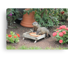 World's Largest Squirrels Canvas Print