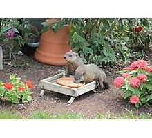 World's Largest Squirrels Photographic Print