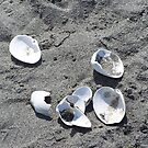 Shells in Sand by Gene Ritchhart