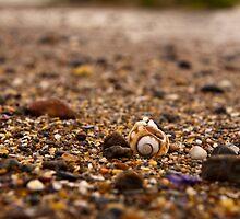 Macro of shells by Richard Keech