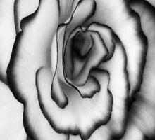 Beauty can still be found even without color!!! ©  by Dawn M. Becker