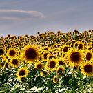Simple Sunflowers by Monica M. Scanlan