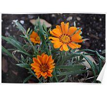 Orange flower 2810 Poster