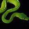 (Amphibians & Reptiles Category) - Family - Pythonidae - Pythons