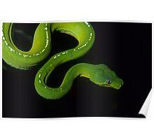 Green Python Poster