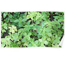Green Leaves Poster