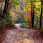 Autumn Colors Deep Within The Wilderness Country Road by NatureGreeting Cards ccwri