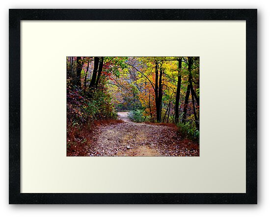 Autumn Colors Deep Within The Wilderness Country Road by NatureGreeting Cards ©ccwri