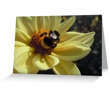 Mr Bumblebee's Flower Greeting Card