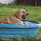 a dog and his pool by debkauble