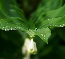 holding the droplets by Andrew Jones