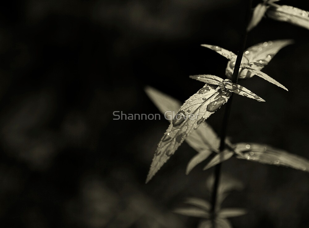 droplets by Shannon Holm