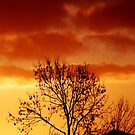 Hot Bush Sunset, Limavady Co. Derry Ireland by mikequigley