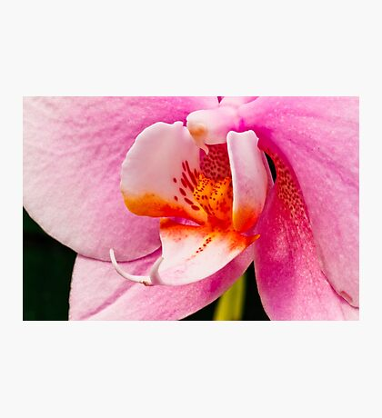 Pink Orchid Macro Photographic Print