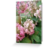 Oak Hydrangea Greeting Card